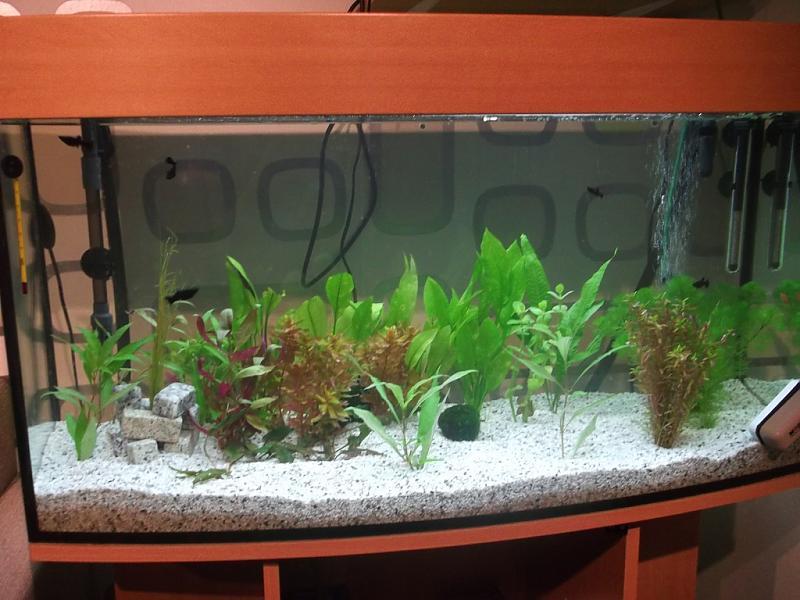 Einrichtung des aquariums aquarium forum for Aquarium einrichtung