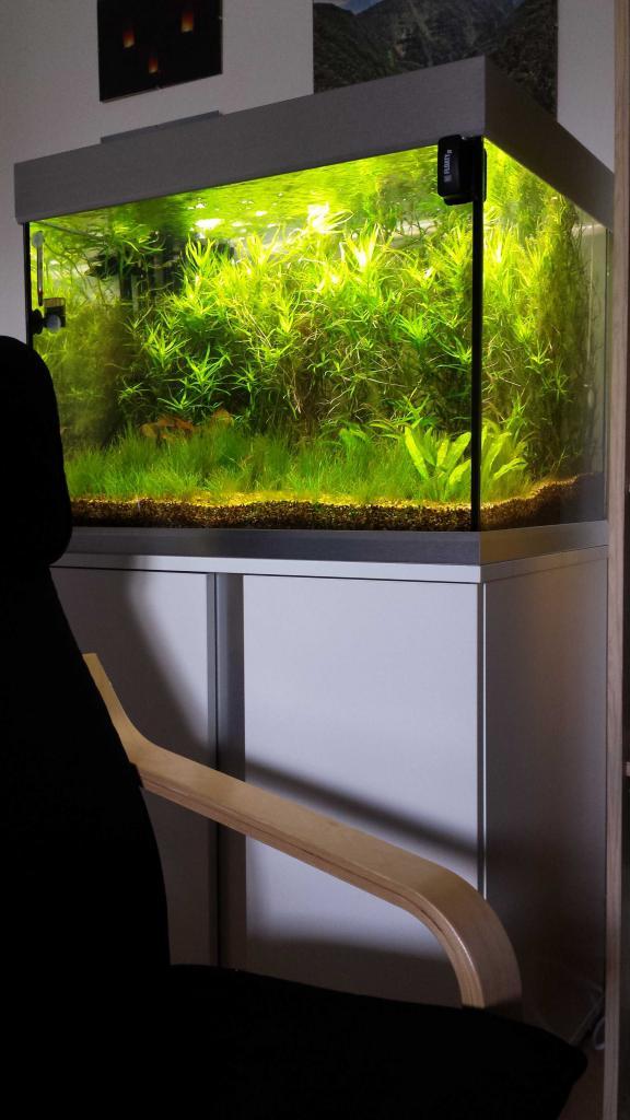 175 liter killifischbecken aquarium forum. Black Bedroom Furniture Sets. Home Design Ideas