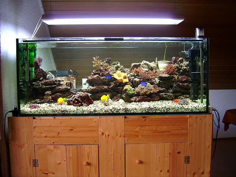 wasserqualit t aquarium forum. Black Bedroom Furniture Sets. Home Design Ideas