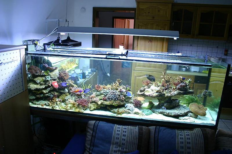 wieder mal anf ngerfragen aquarium forum. Black Bedroom Furniture Sets. Home Design Ideas