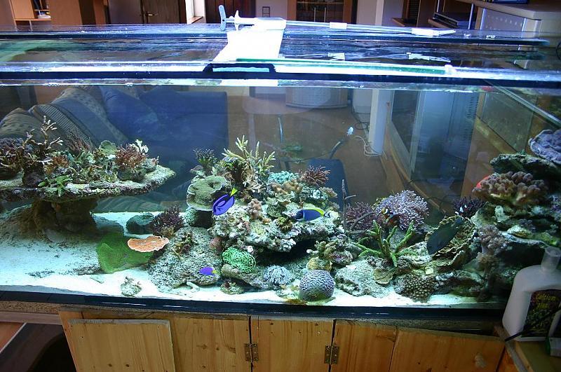 720l riffbecken aquarium forum. Black Bedroom Furniture Sets. Home Design Ideas