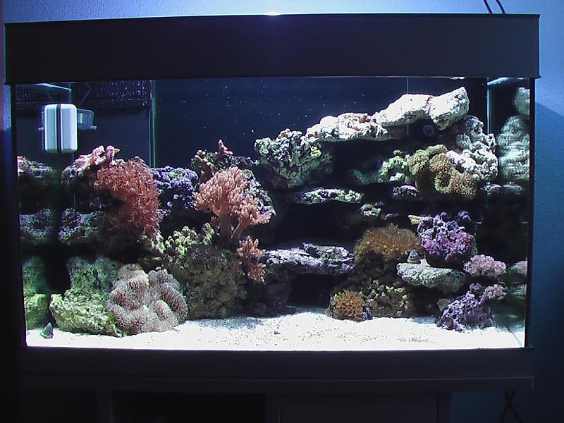 250l aquarium umstellen auf salzwasser!   Aquarium Forum