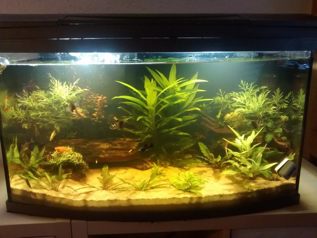 Wasserwechsel wegen algen aquarium forum for Aquarium wasserwechsel