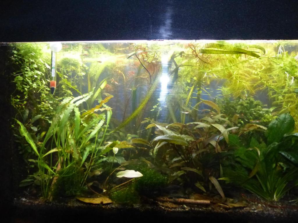 pflanzen d ngen oder nicht d ngen das ist hier die frage seite 2 aquarium forum. Black Bedroom Furniture Sets. Home Design Ideas