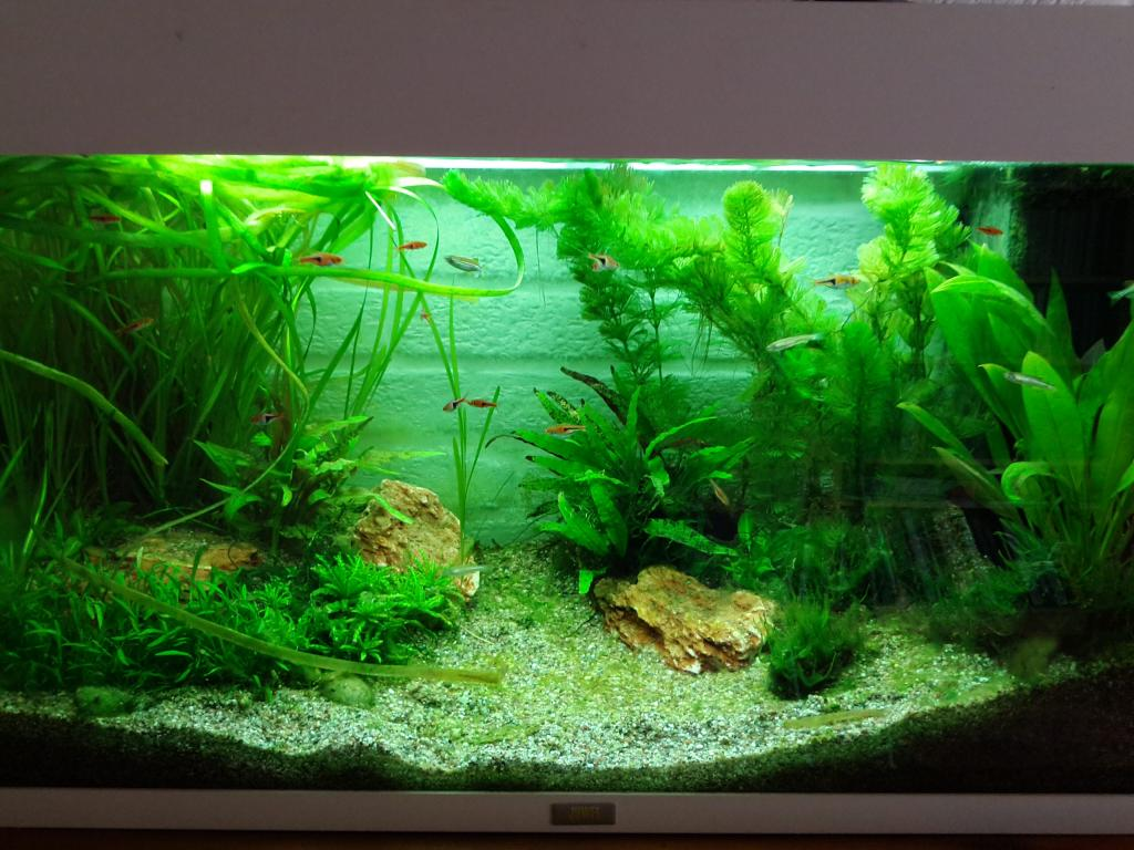 120 liter asiabiotopbecken aquarium forum. Black Bedroom Furniture Sets. Home Design Ideas