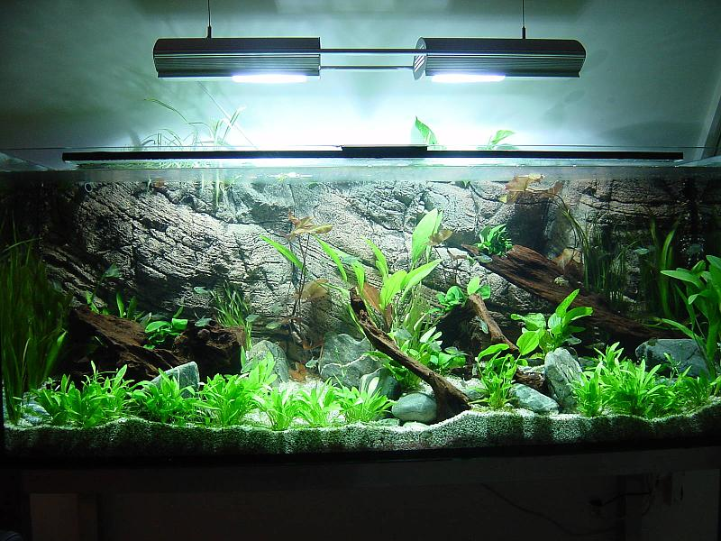 Allererstes Naturaquarium 540L Salmlerbecken - Aquarium Forum