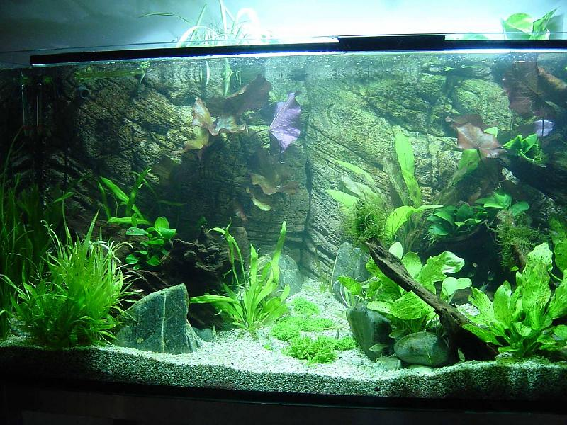 allererstes naturaquarium 540l salmlerbecken seite 2 aquarium forum. Black Bedroom Furniture Sets. Home Design Ideas
