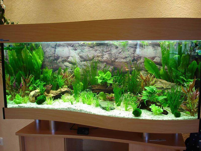 270L MP Aquarium   Aquariumforum de  Bildergalerie