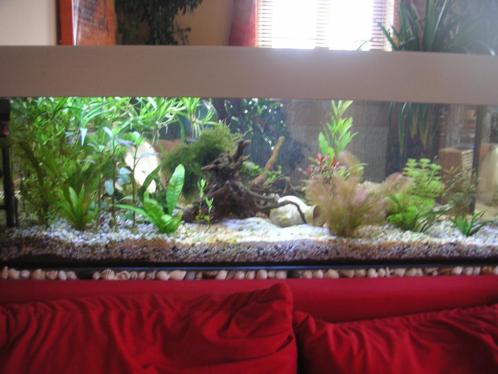 co2 d ngung und oder kh erh hen aquarium forum. Black Bedroom Furniture Sets. Home Design Ideas