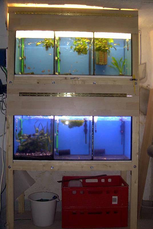 kleine zuchtanlage f r guppys und marmorkrebse aquarium forum. Black Bedroom Furniture Sets. Home Design Ideas