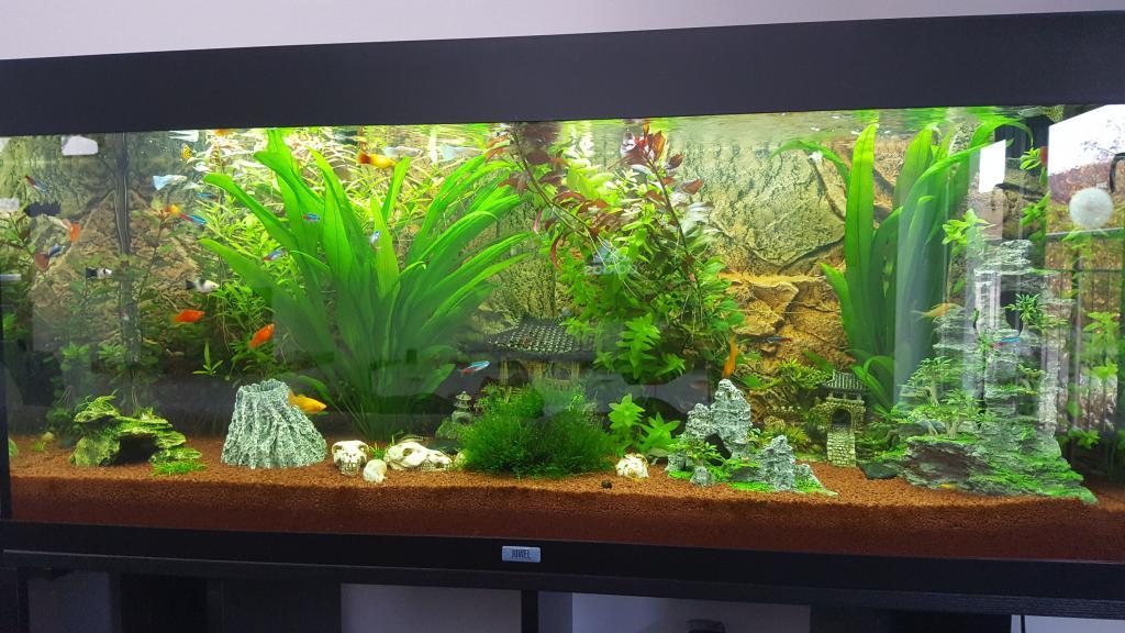 projekt umgestaltung meines aquariums aquarium forum. Black Bedroom Furniture Sets. Home Design Ideas