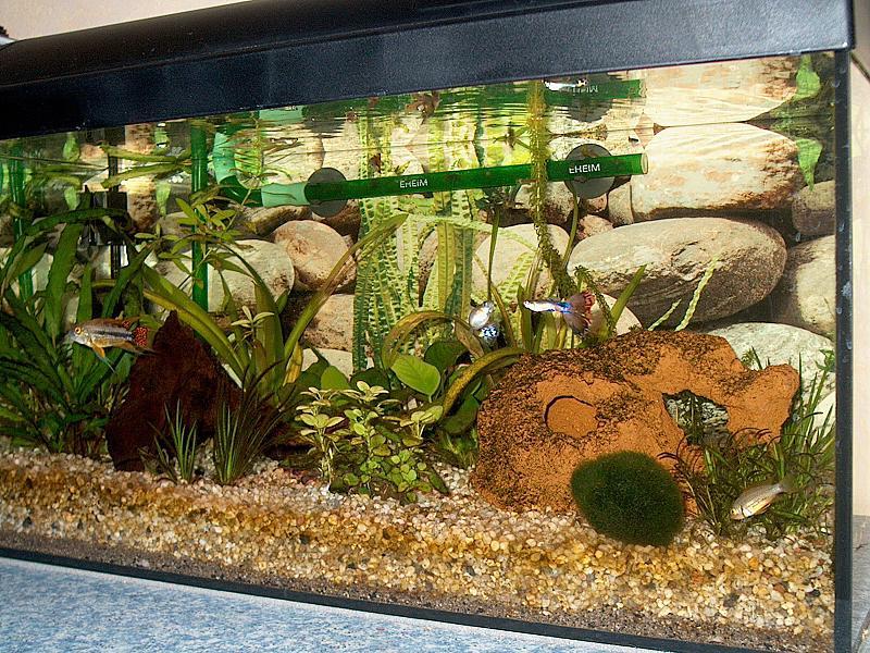 gestaltung 54l aq so denkbar aquarium forum. Black Bedroom Furniture Sets. Home Design Ideas