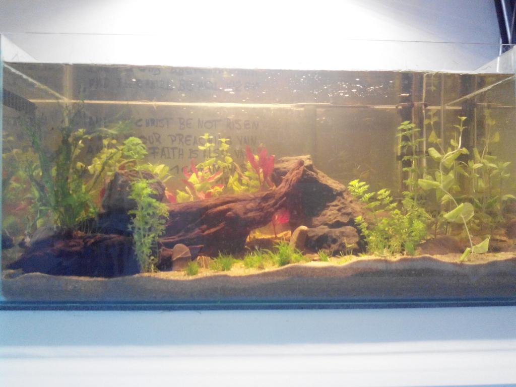 bis 54l 60l viele pflanzen wenig fisch aquarium forum. Black Bedroom Furniture Sets. Home Design Ideas