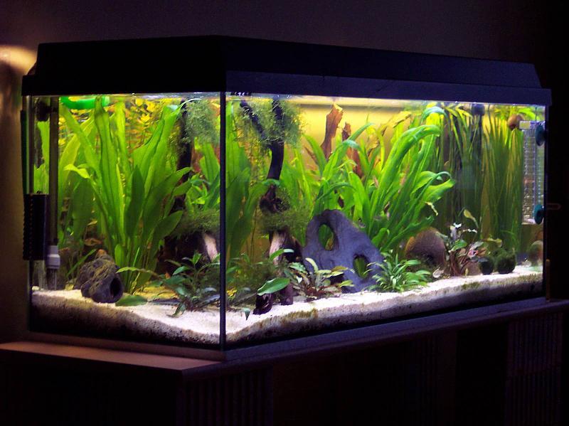 160 liter aquarium 3 monate nach neueinrichtung. Black Bedroom Furniture Sets. Home Design Ideas