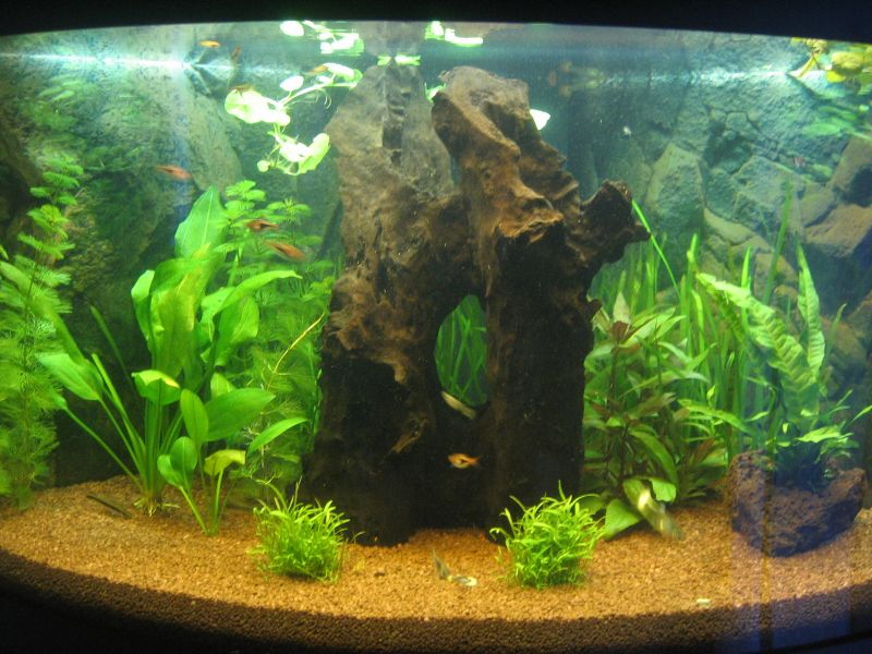 umgestaltung 190l eckaquarium aquarium forum. Black Bedroom Furniture Sets. Home Design Ideas