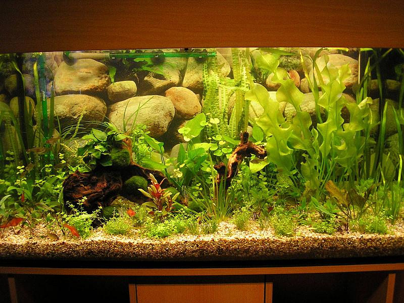 mein 200 liter becken aquarium forum. Black Bedroom Furniture Sets. Home Design Ideas