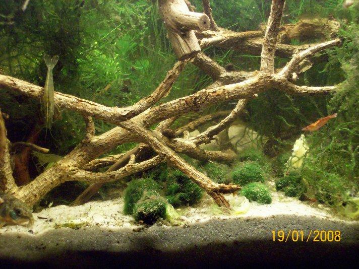 54l panzerwelse garnelen aquarium forum for Aquarium reinigen