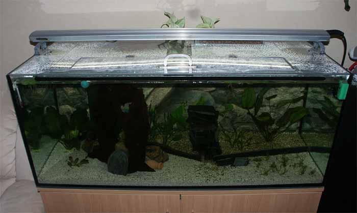 Transparente abdeckung aquarium forum for Aquarium abdeckung