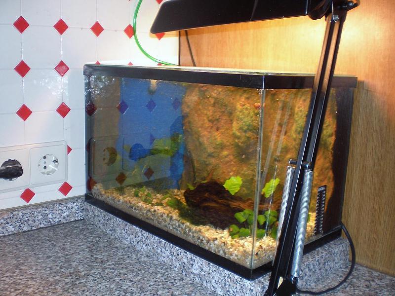 welche lacke f r r ckwand aquarium forum. Black Bedroom Furniture Sets. Home Design Ideas