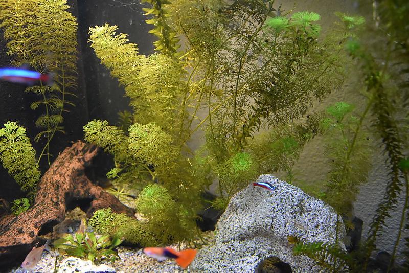 aquarienpflanzen wachsen nicht aquarium forum. Black Bedroom Furniture Sets. Home Design Ideas