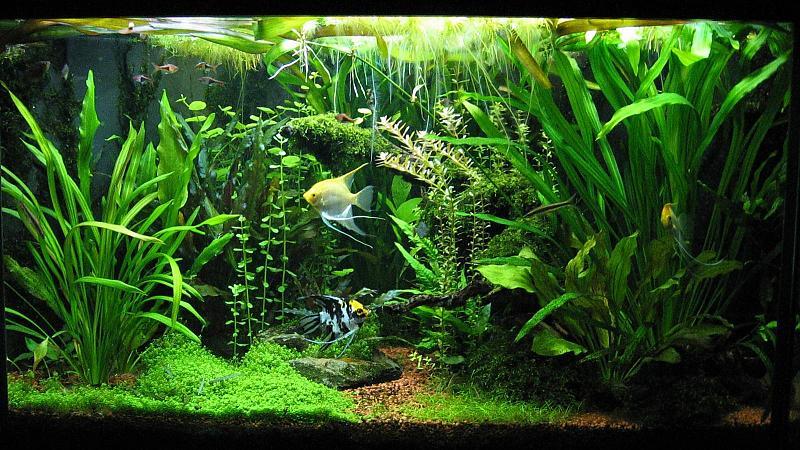 400 Liter Gesellschaftsbecken Aquarium Forum
