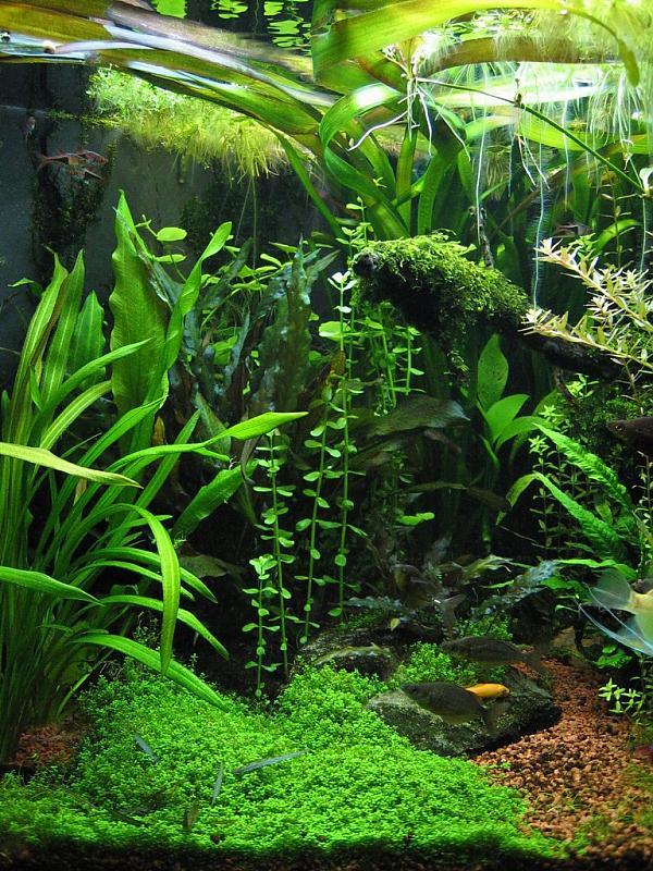 400 liter gesellschaftsbecken aquarium forum. Black Bedroom Furniture Sets. Home Design Ideas