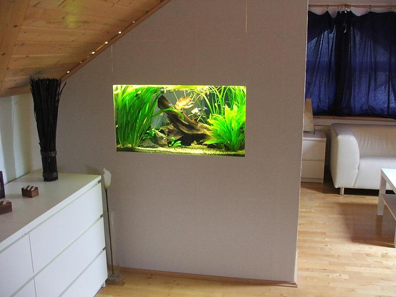 mein 250 liter raumteilerbecken seite 5 aquarium forum. Black Bedroom Furniture Sets. Home Design Ideas