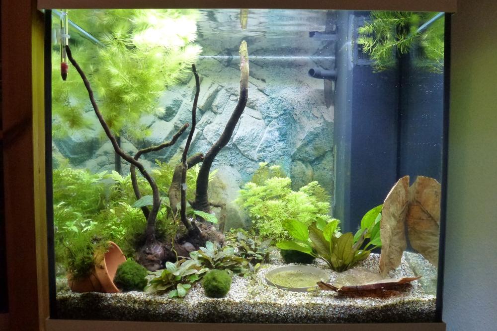 Lido 120 led faszination im kinderzimmer seite 2 for Aquarium im kinderzimmer