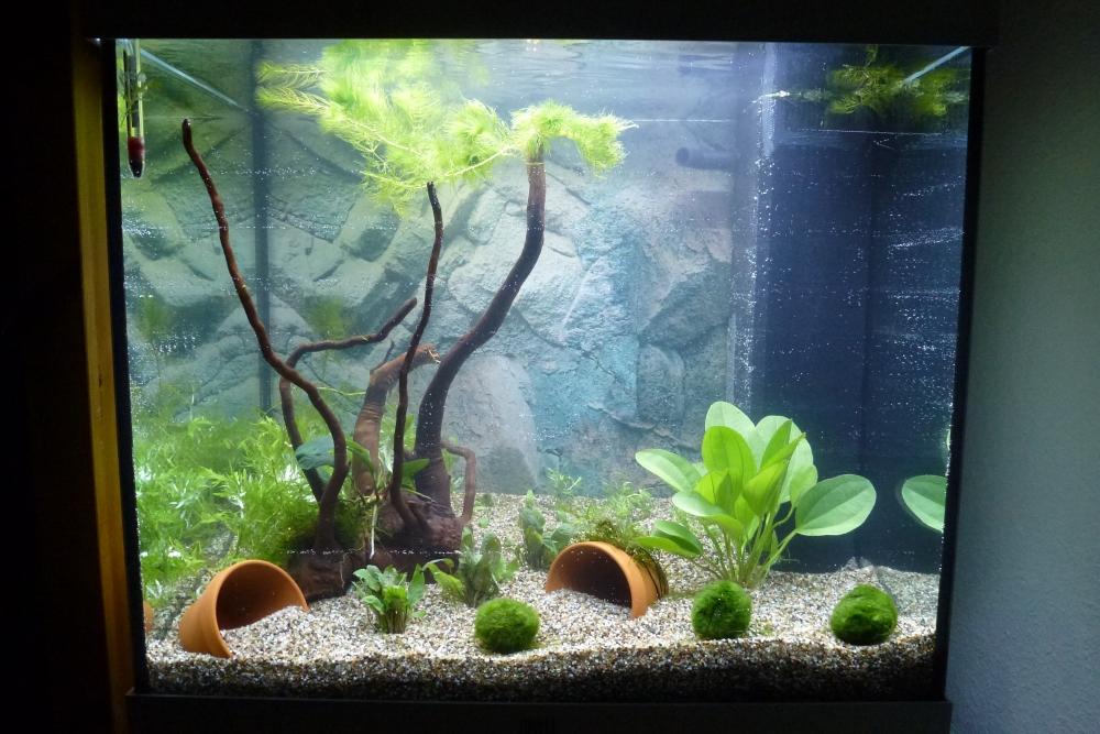 Lido 120 led faszination im kinderzimmer aquarium forum for Aquarium im kinderzimmer
