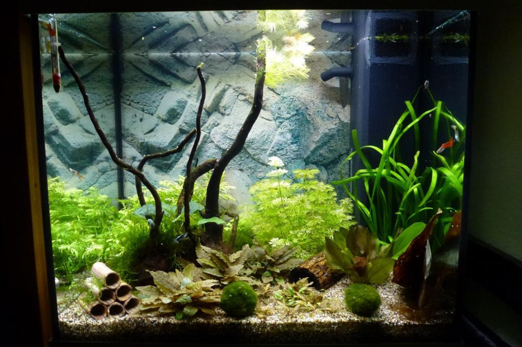 Lido 120 led faszination im kinderzimmer seite 3 for Aquarium im kinderzimmer