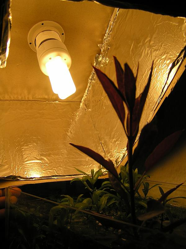 beleuchtung abdeckung f r 12 liter aquarium forum. Black Bedroom Furniture Sets. Home Design Ideas