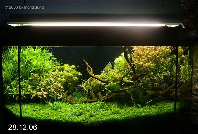 Riccia Fluitans Aquarium Forum