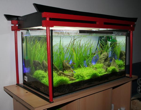 54 liter aquarium fische