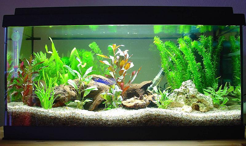54 l aquarium 3 tage nach einrichtung bildergalerie. Black Bedroom Furniture Sets. Home Design Ideas