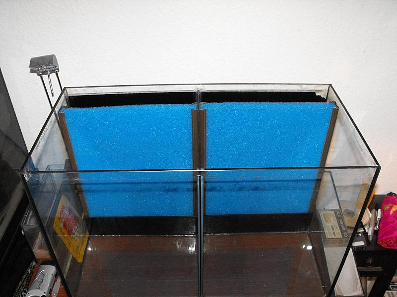 2x35l aufzuchtbecken aquarium forum. Black Bedroom Furniture Sets. Home Design Ideas