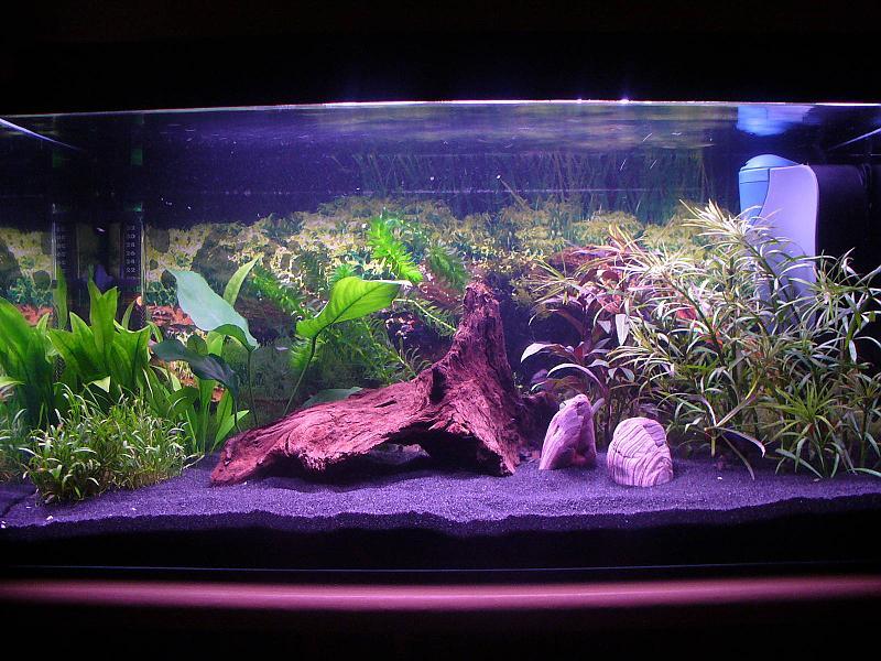otos oder lda25 aquarium forum. Black Bedroom Furniture Sets. Home Design Ideas