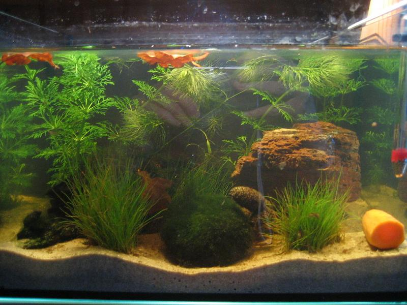 beleuchtung abdeckung 12l aquarium forum. Black Bedroom Furniture Sets. Home Design Ideas