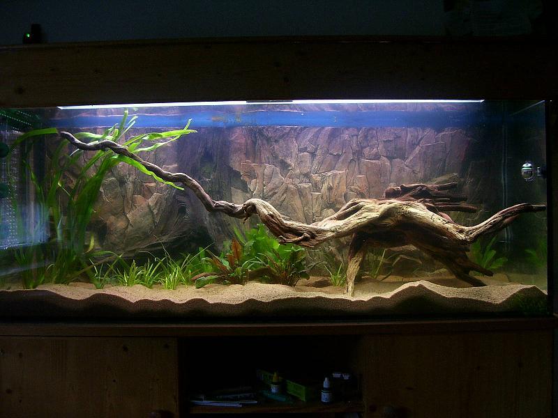 diskusaquarium 450 liter aquarium forum. Black Bedroom Furniture Sets. Home Design Ideas