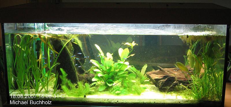algen trotz oder wegen keinem nitrat und phosphat aquarium forum. Black Bedroom Furniture Sets. Home Design Ideas