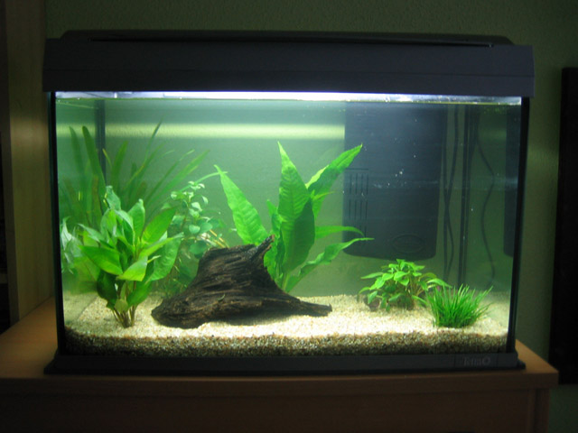 mein neues tetra aquaart 60l aquarium forum. Black Bedroom Furniture Sets. Home Design Ideas