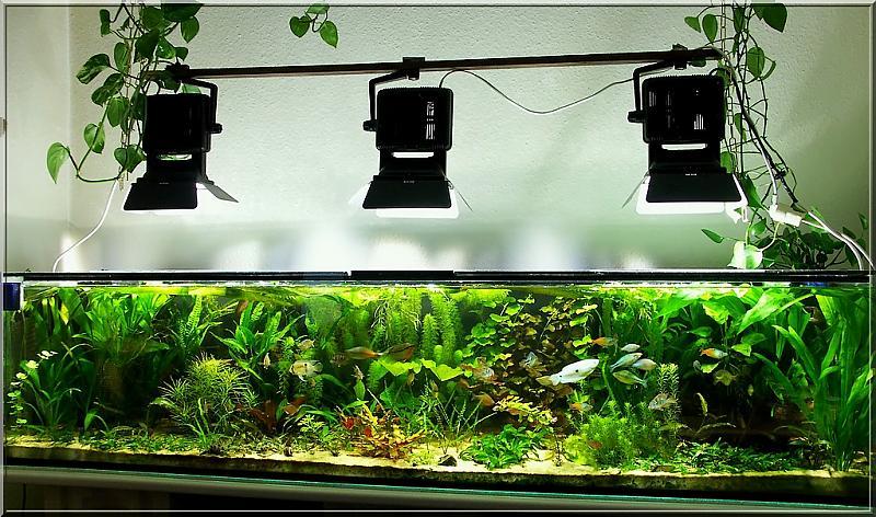 zeigt her eure alten becken seite 2 aquarium forum. Black Bedroom Furniture Sets. Home Design Ideas