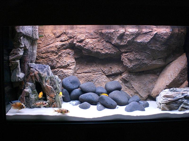 mein pers nlicher malawi traum aquarium forum. Black Bedroom Furniture Sets. Home Design Ideas