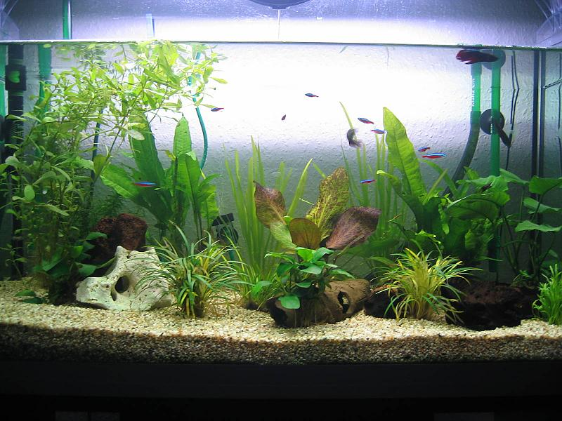 Neues 120 liter becken aquarium forum for Aquarium 120 litres