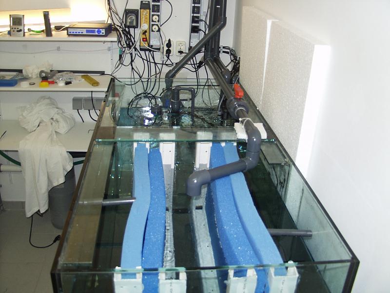 meerwasser filterbecken selber bauen l rs tiny tank seite ber liter dein. Black Bedroom Furniture Sets. Home Design Ideas