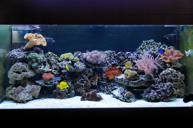 mein erstes aquarium berhaupt seite 2 aquarium forum. Black Bedroom Furniture Sets. Home Design Ideas