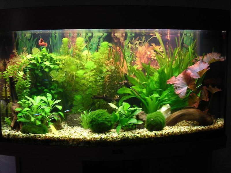 vorstellung meines juwel vision 180 aquarium forum. Black Bedroom Furniture Sets. Home Design Ideas