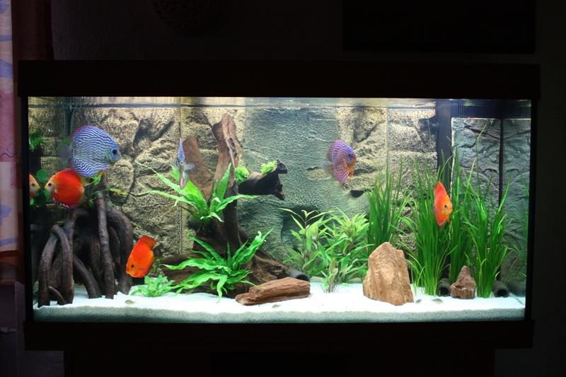 mein neues 360l diskusbecken seite 2 aquarium forum. Black Bedroom Furniture Sets. Home Design Ideas