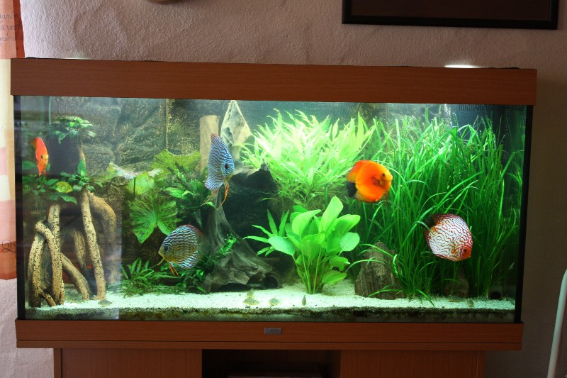 neuvorstellung 360 l diskusbecken aquarium forum. Black Bedroom Furniture Sets. Home Design Ideas