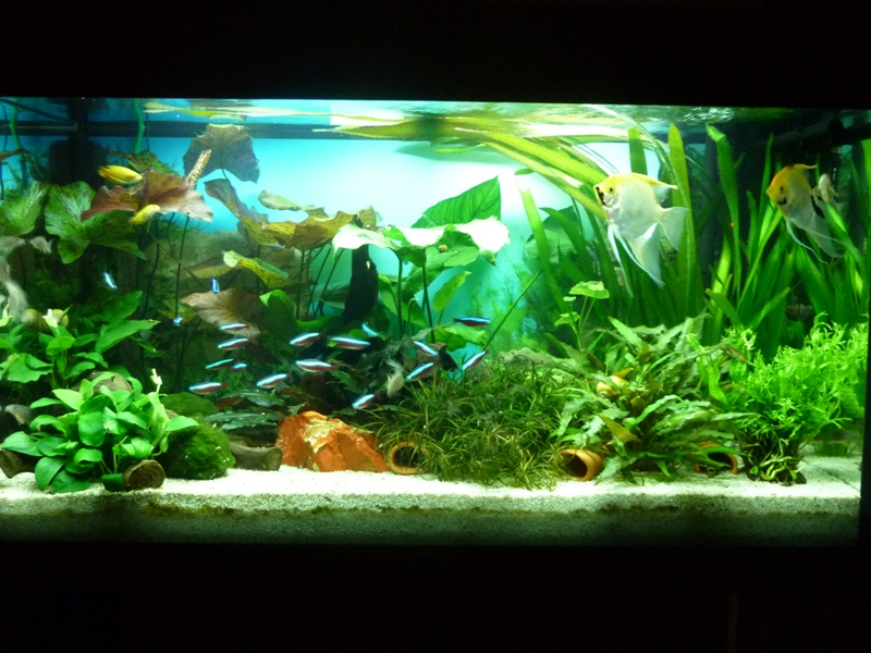 neuvorstellung juwel rio 125 aquarium forum. Black Bedroom Furniture Sets. Home Design Ideas