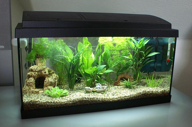 neu eingerichtetes aquarium mit innenfilter seite 3. Black Bedroom Furniture Sets. Home Design Ideas